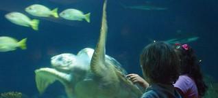 Nachts im Aquarium