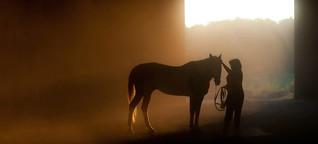 Was wissen Sie über Pferde?