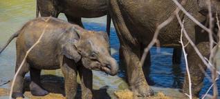 Sri Lanka: Busen, Buddhas und Baby-Elefanten