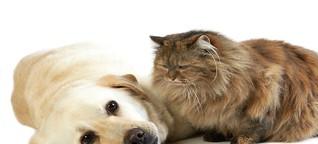 WDR 5 - Gibt es Hunde oder Katzen mit Menschenallergie?