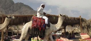 Am Sinai zwischen den Fronten
