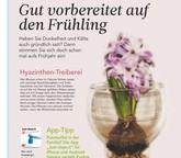 Ratgeber: Hyazinthen-Treiberei, Putz-App & Co