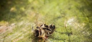 NGOs: Bayer verheimlicht tödliche Wirkung von Pestiziden auf Bienen