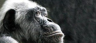 Fotostrecke: Philosophie der Tiere