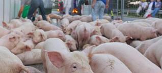 Mängel bei Tiertransporten: Grüne fordern strengere Kontrollen