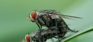 Regenbogenpresse kann tödlich sein (für Fliegen)