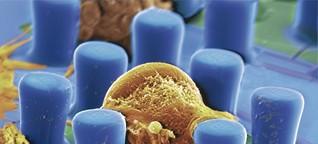 Wie riskant ist die Nanotechnologie?