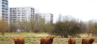 Unsere große Farm - Urbane Landwirtschaft in Berlin