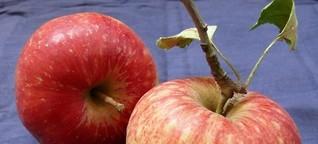 Apfelsorten - was wächst in meinem Garten? - Artikelmagazin