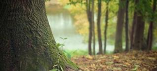 Regelungen fürs Bäumefällen: Sebastian Kühn im Experteninterview