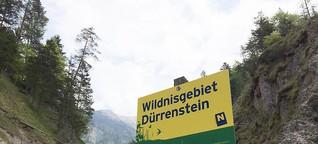 Mehr Wildnis in Europa - Wie Natur wieder Natur werden kann