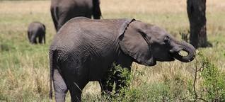 Versiegende Lebensadern: Kenianische Nationalparks trocknen aus