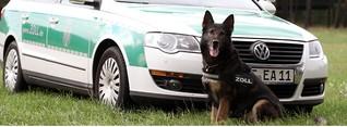 Zollhund Falko stellt Zigarettenschmuggler auf der Flucht - Jeroen Breforth - German Daily News