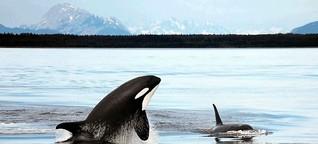 LEBEN UND STERBEN IM ORCA-CLAN