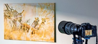Geparden-Jagd im Wohnzimmer