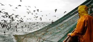 Überfischung: Wir essen die Weltmeere leer