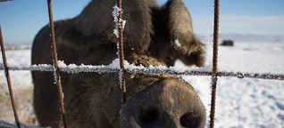 Sau gut – Forschung für artgerechte Schweinehaltung