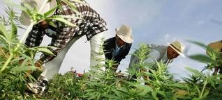 Marihuana made in Marokko
