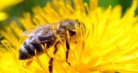 Bienenfleißige Imker-Azubis: Im Dienste der Königin - SPIEGEL ONLINE