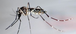 Do-It-Yourself: Mit Autoreifen als Mückenfalle gegen das Zika-Virus