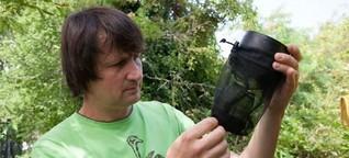 Sterile Männchen im Einsatz gegen die Tigermücke