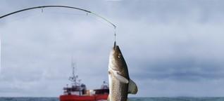 Wie eine App die Überfischung der Meere aufhalten will - Mit Technik gegen die undurchsichtige Fischindustrie