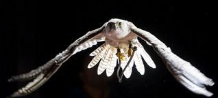 Vom Falken lernen