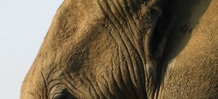 Auf Safari in Südafrika: Wildreservate ohne Malaria