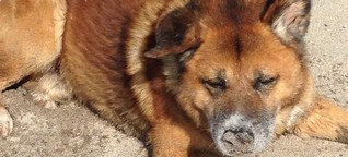 Tote Tiere im Container zu entsorgen ist normal in Bodrum - dem St. Tropez der Türkei!