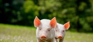 Die Anwälte der Tiere | Wissenschaftsladen Bonn