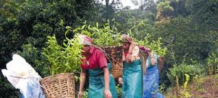 """""""Fairtrade kann am Lohn auf Plantagen nichts ändern"""""""