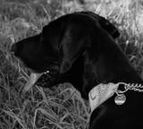Tasso e.V.: Hunde, Katzen und Happy Ends