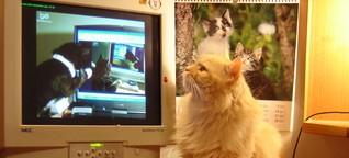 Herrscherinnen des Internets | Sind Katzenvideos Kunst?