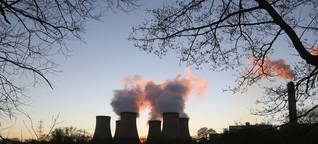 Kohlekraftwerke gieren nach Holz