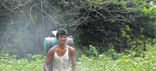 Der Kampf von Baumwollbauern ums Überleben