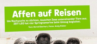 Affen auf Reisen