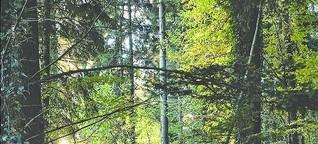 Schwarz, Wald, Gold