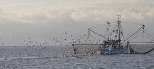 Auf Krabbenjagd: eine Multimediareportage