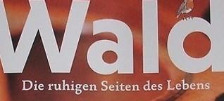 Die Renaissance des Holzbaus - WALD