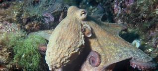 Sex, Brain und Unterwasserballett: Herr Precht und der postfaktische Krake