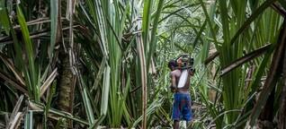 Palmöl: das kleinere Übel?