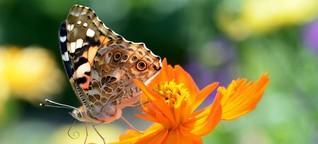 Bundesamt für Naturschutz erarbeitet bundesweites Insektenmonitoring