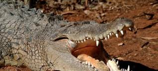So überlebst du den Krokodilangriff (Deutschlandfunk Nova)
