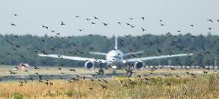 Vogelschlag bei Flugzeugen - Die Federforscher