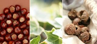 Was Kastanien, Efeu und Waschnüsse können