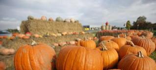Hokkaido-Herbst: In der vielseitigen Leckerei steckt mehr als bloß Suppe