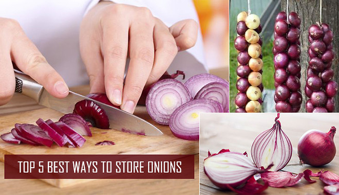Top 5 Best Ways To Store Onions Hours Tv Torial