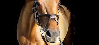 Ich und das Pferd