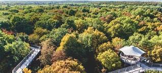Nationalpark Hainich: Der Thüringer Urwald