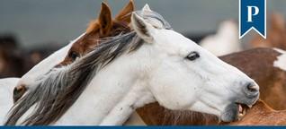 Tierbeziehung: Freundliche Sozialkontakte mit Langzeiteffekt